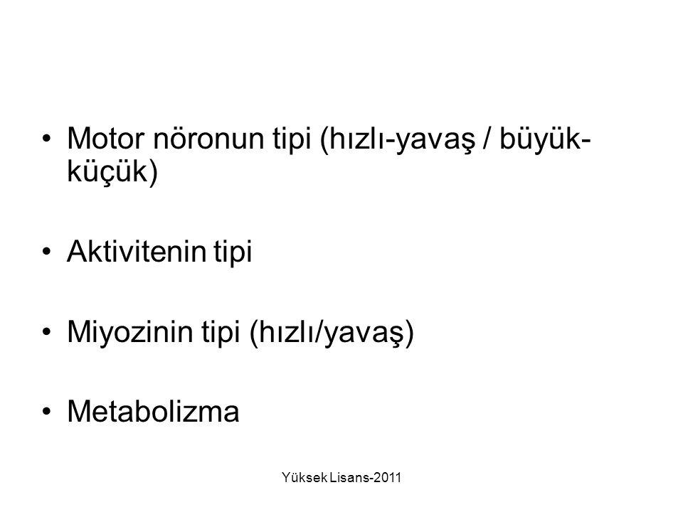 Motor nöronun tipi (hızlı-yavaş / büyük- küçük) Aktivitenin tipi Miyozinin tipi (hızlı/yavaş) Metabolizma