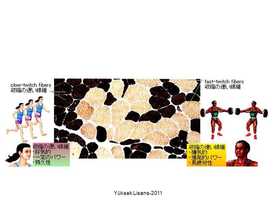 Yüksek Lisans-2011