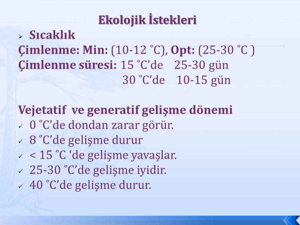 Ekolojik İstekleri  Sıcaklık Çimlenme: Min: (10-12 ˚C), Opt: (25-30 ˚C ) Çimlenme süresi: 15 ˚C'de 25-30 gün 30 ˚C'de 10-15 gün Vejetatif ve generati