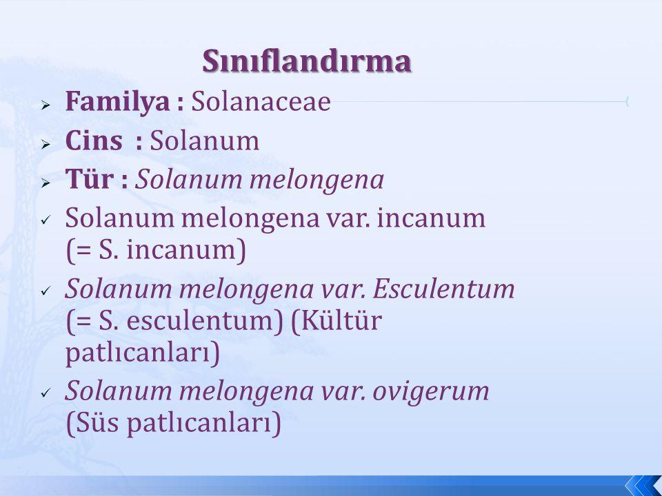 Sınıflandırma Sınıflandırma  Familya : Solanaceae  Cins : Solanum  Tür : Solanum melongena Solanum melongena var. incanum (= S. incanum) Solanum me