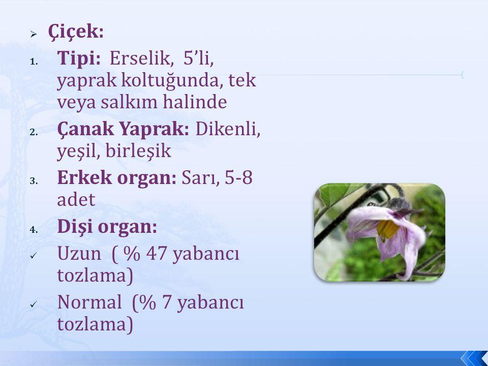  Çiçek: 1. Tipi: Erselik, 5'li, yaprak koltuğunda, tek veya salkım halinde 2. Çanak Yaprak: Dikenli, yeşil, birleşik 3. Erkek organ: Sarı, 5-8 adet 4