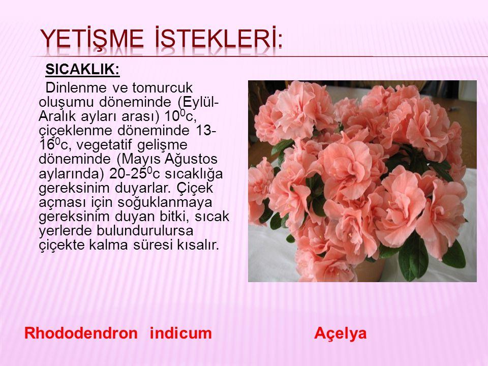 SICAKLIK: Dinlenme ve tomurcuk oluşumu döneminde (Eylül- Aralık ayları arası) 10 0 c, çiçeklenme döneminde 13- 16 0 c, vegetatif gelişme döneminde (Ma