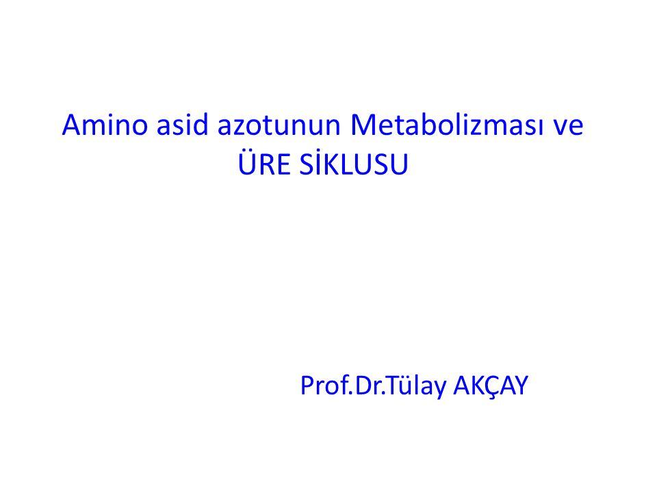 Amino asid azotunun Metabolizması ve ÜRE SİKLUSU Prof.Dr.Tülay AKÇAY