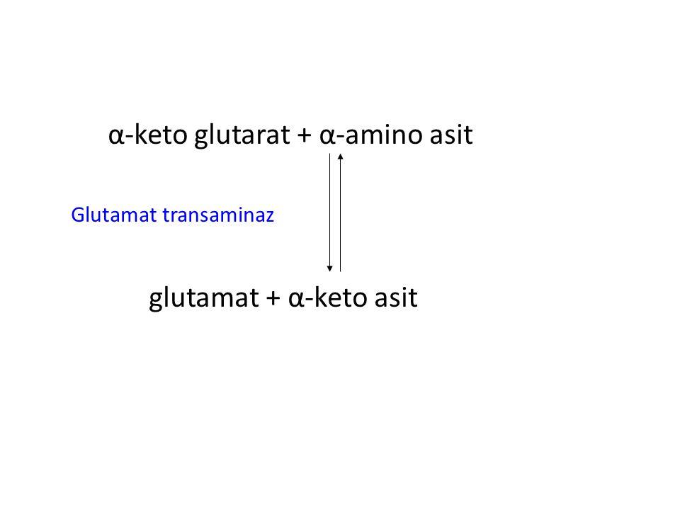 α-keto glutarat + α-amino asit Glutamat transaminaz glutamat + α-keto asit
