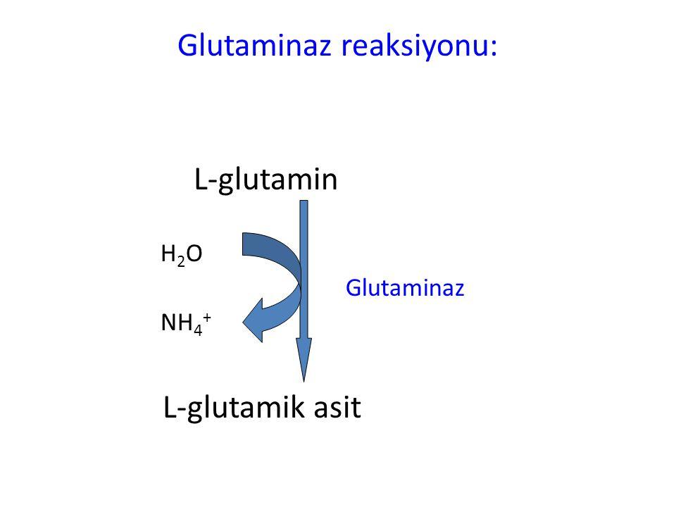Glutaminaz reaksiyonu: L-glutamin H 2 O Glutaminaz NH 4 + L-glutamik asit