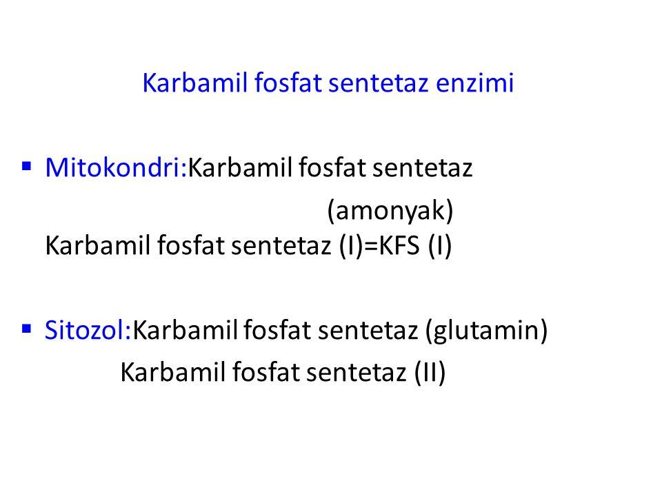 Karbamil fosfat sentetaz enzimi  Mitokondri:Karbamil fosfat sentetaz (amonyak) Karbamil fosfat sentetaz (I)=KFS (I)  Sitozol:Karbamil fosfat senteta