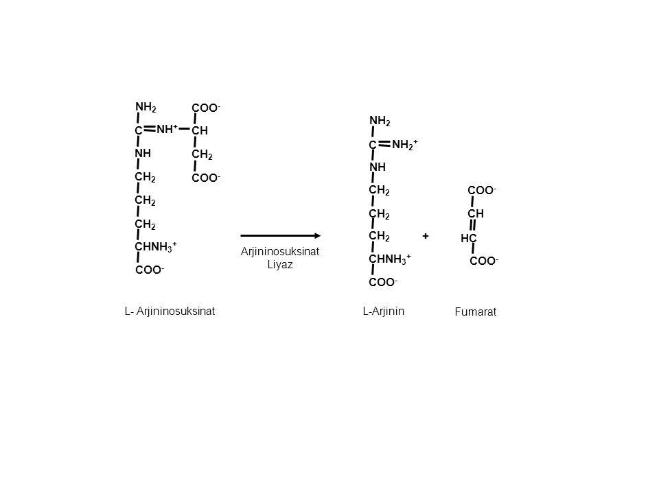 + CH HC NH + COO - CH 2 NH COO - NH 2 C CH 2 CHNH 3 + Arjininosuksinat Liyaz Fumarat COO - CH 2 NH COO - NH 2 C CH 2 CHNH 3 + CH CH 2 COO - L- Arjinin