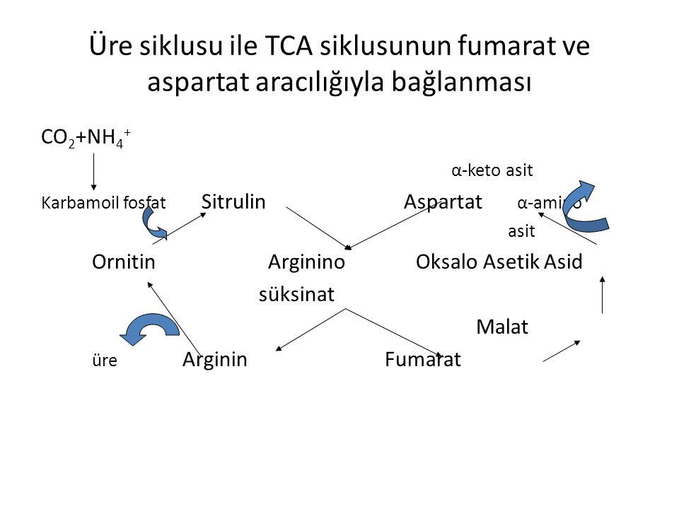 Üre siklusu ile TCA siklusunun fumarat ve aspartat aracılığıyla bağlanması CO 2 +NH 4 + α-keto asit Karbamoil fosfat Sitrulin Aspartat α-amino asit Or