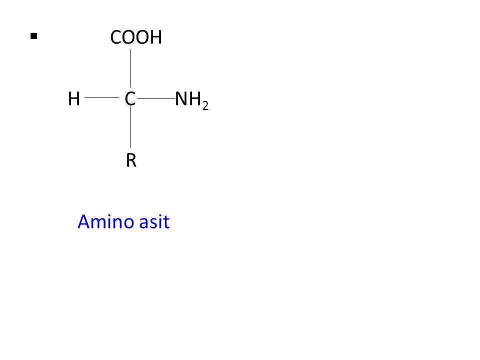  COOH H C NH 2 R Amino asit