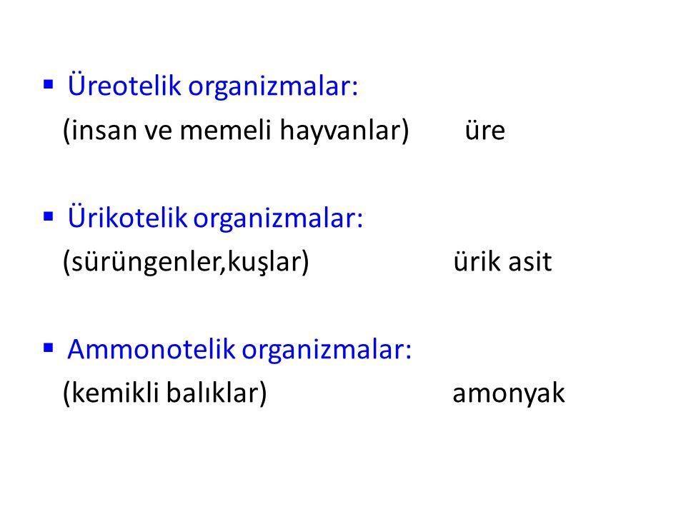  Üreotelik organizmalar: (insan ve memeli hayvanlar) üre  Ürikotelik organizmalar: (sürüngenler,kuşlar) ürik asit  Ammonotelik organizmalar: (kemik
