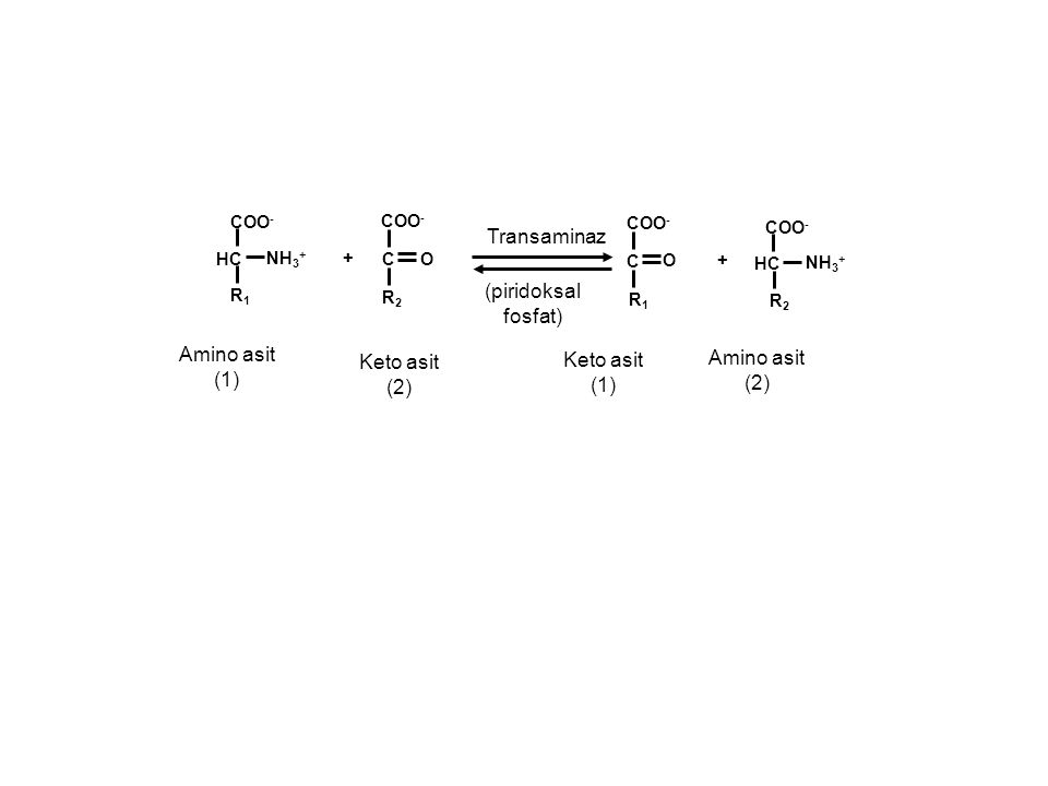 + HC COO - Amino asit (1) O R1R1 COO - NH 3 + C R2R2 Keto asit (2) + HC COO - Amino asit (2) O R2R2 COO - NH 3 + C R1R1 Keto asit (1) Transaminaz (pir
