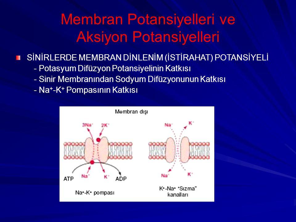 Membran Potansiyelleri ve Aksiyon Potansiyelleri SİNİRLERDE MEMBRAN DİNLENİM (İSTİRAHAT) POTANSİYELİ - Potasyum Difüzyon Potansiyelinin Katkısı - Sinir Membranından Sodyum Difüzyonunun Katkısı - Na + -K + Pompasının Katkısı