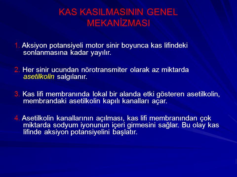 KAS KASILMASININ GENEL MEKANİZMASI 1.