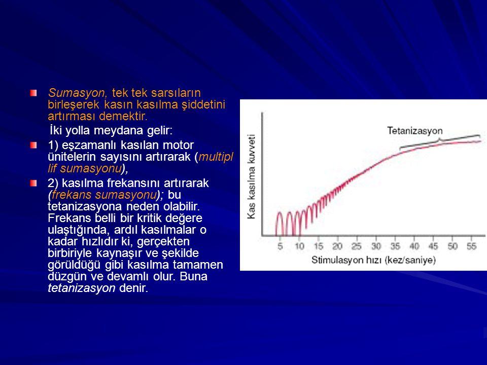 Sumasyon, tek tek sarsıların birleşerek kasın kasılma şiddetini artırması demektir.