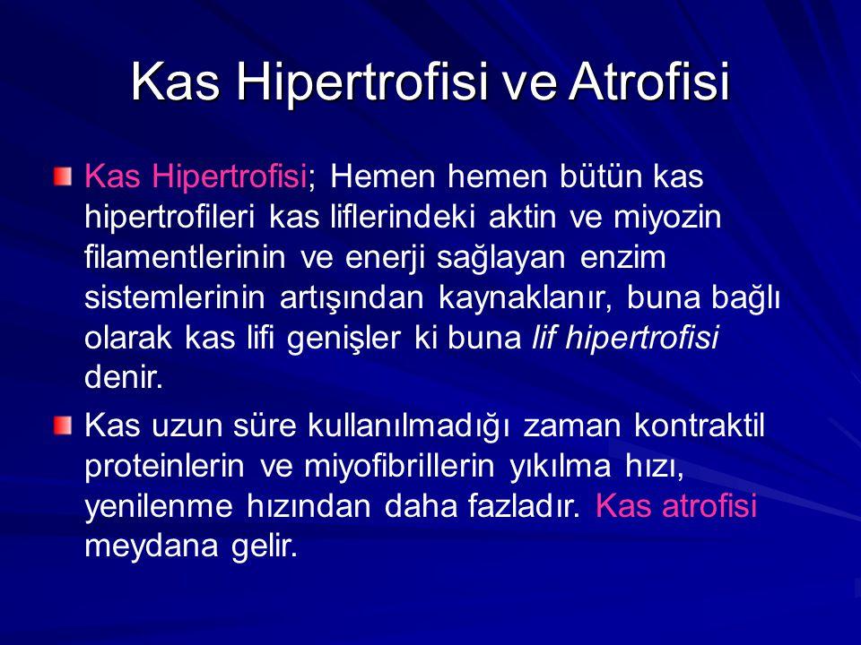 Kas Hipertrofisi ve Atrofisi Kas Hipertrofisi; Hemen hemen bütün kas hipertrofileri kas liflerindeki aktin ve miyozin filamentlerinin ve enerji sağlayan enzim sistemlerinin artışından kaynaklanır, buna bağlı olarak kas lifi genişler ki buna lif hipertrofisi denir.