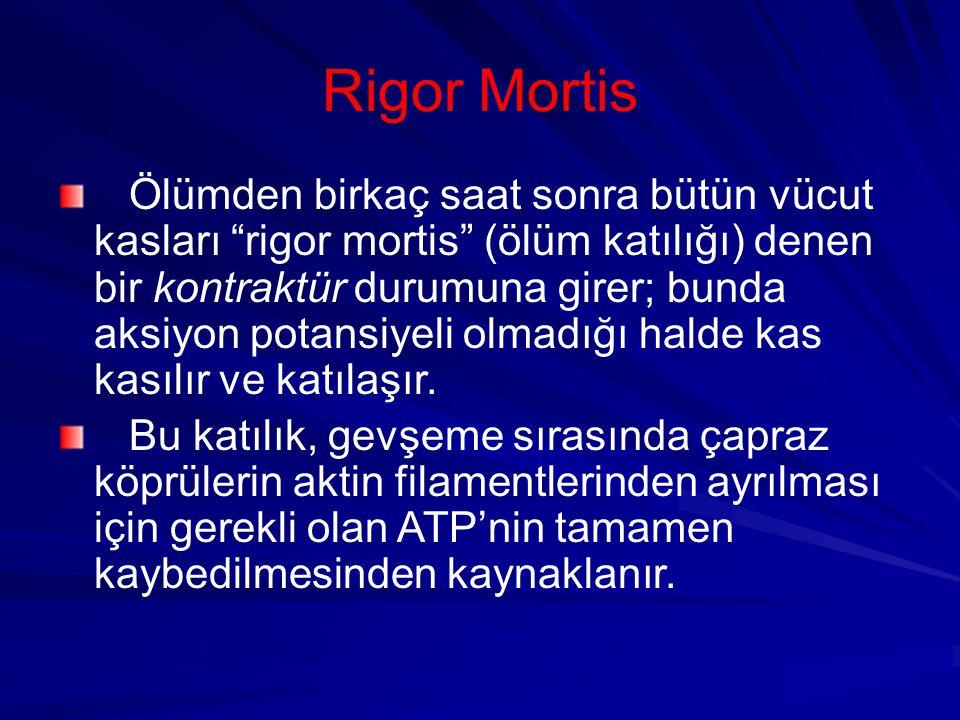 Rigor Mortis Ölümden birkaç saat sonra bütün vücut kasları rigor mortis (ölüm katılığı) denen bir kontraktür durumuna girer; bunda aksiyon potansiyeli olmadığı halde kas kasılır ve katılaşır.
