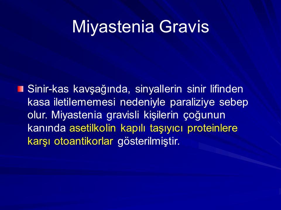 Miyastenia Gravis Sinir-kas kavşağında, sinyallerin sinir lifinden kasa iletilememesi nedeniyle paraliziye sebep olur.