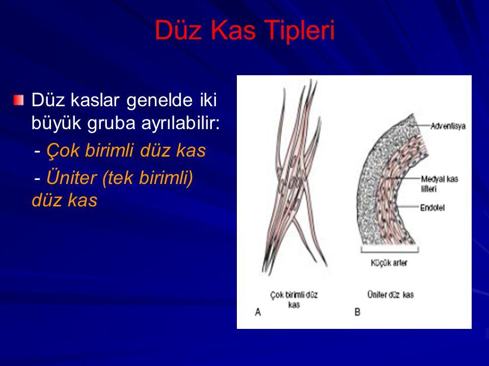 Düz Kas Tipleri Düz kaslar genelde iki büyük gruba ayrılabilir: - Çok birimli düz kas - Üniter (tek birimli) düz kas