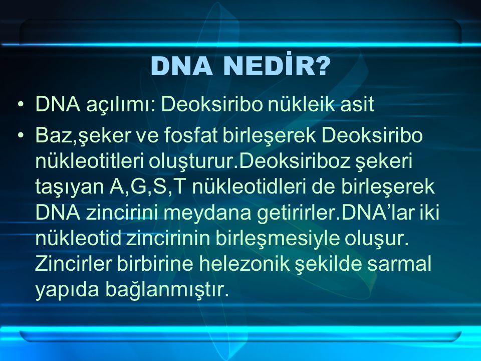 DNA NEDİR.