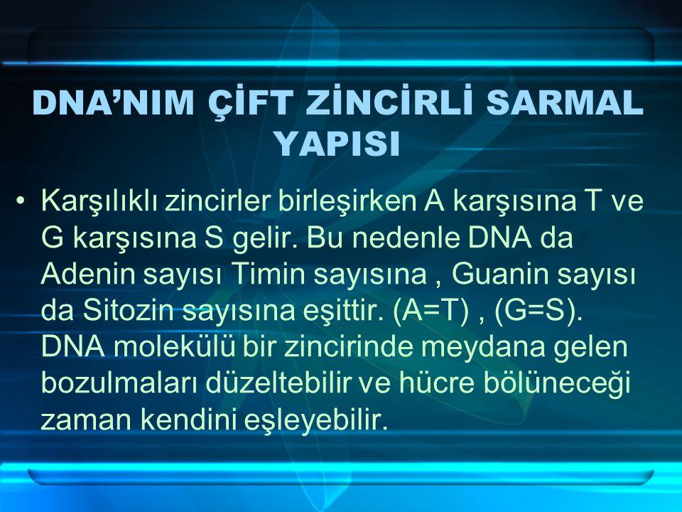 DNA'NIM ÇİFT ZİNCİRLİ SARMAL YAPISI Karşılıklı zincirler birleşirken A karşısına T ve G karşısına S gelir.