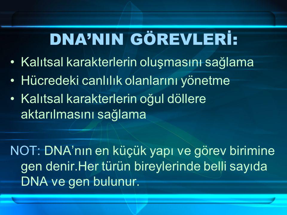 DNA'NIN GÖREVLERİ: Kalıtsal karakterlerin oluşmasını sağlama Hücredeki canlılık olanlarını yönetme Kalıtsal karakterlerin oğul döllere aktarılmasını sağlama NOT: DNA'nın en küçük yapı ve görev birimine gen denir.Her türün bireylerinde belli sayıda DNA ve gen bulunur.