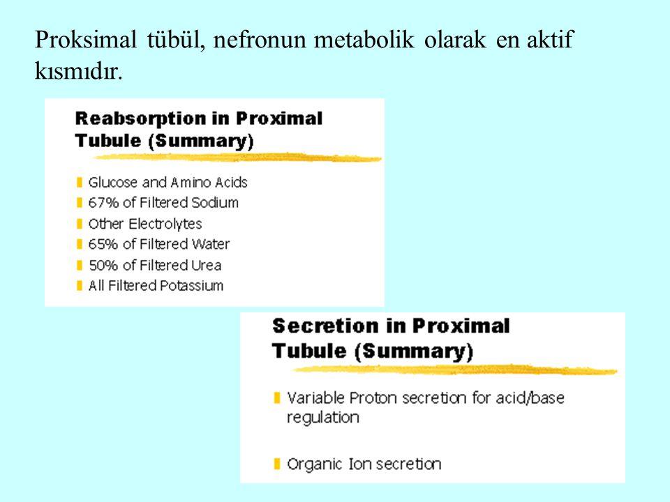 18 Proksimal tübül, nefronun metabolik olarak en aktif kısmıdır.
