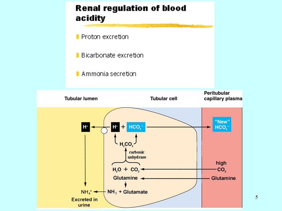6 Böbreklerin endokrin işlevleri 1) Eritropoietin ile eritropoezin uyarılması.