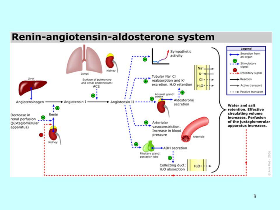 29 Distal tüplerde ve kollektör kanallarda Na + geri emilimi aldosteron tarafından, su geri emilimi antidiüretik hormon (ADH) tarafından düzenlenir