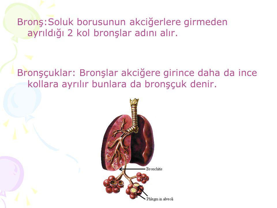Bronş:Soluk borusunun akciğerlere girmeden ayrıldığı 2 kol bronşlar adını alır. Bronşçuklar: Bronşlar akciğere girince daha da ince kollara ayrılır bu