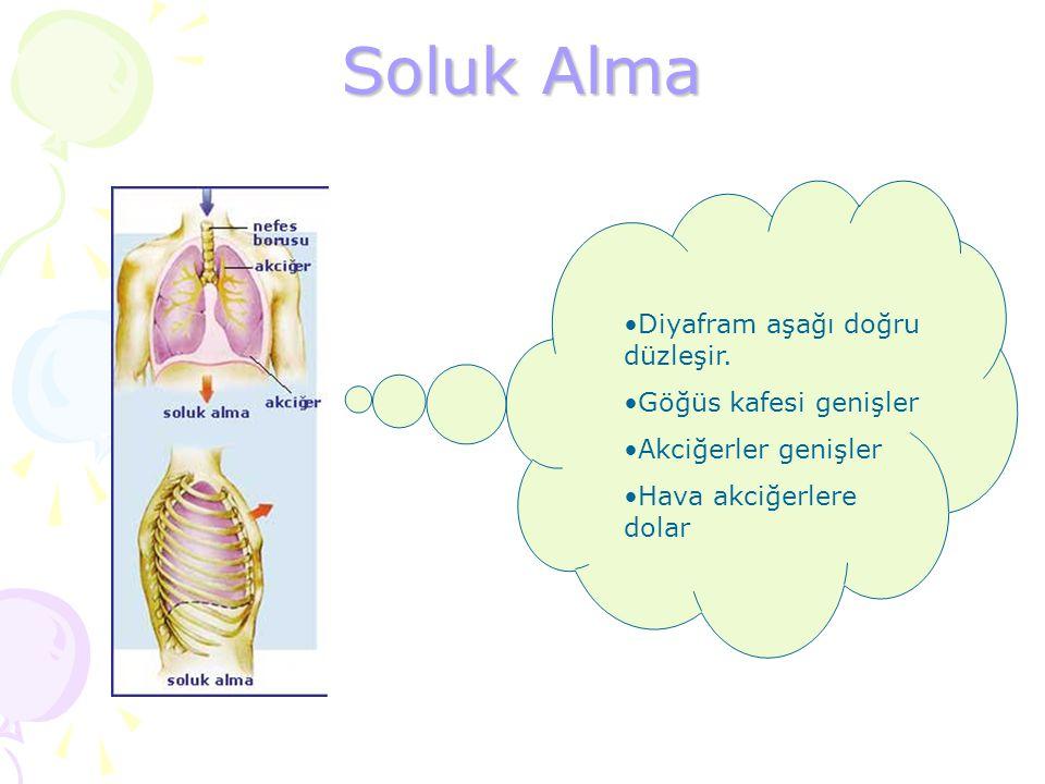 Soluk Alma Diyafram aşağı doğru düzleşir. Göğüs kafesi genişler Akciğerler genişler Hava akciğerlere dolar