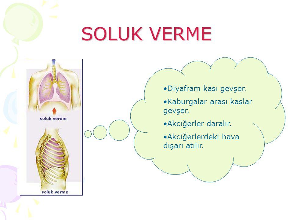 SOLUK VERME Diyafram kası gevşer. Kaburgalar arası kaslar gevşer. Akciğerler daralır. Akciğerlerdeki hava dışarı atılır.