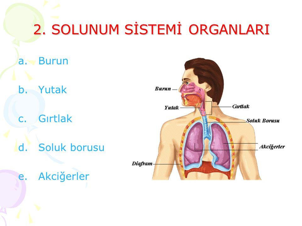 2. SOLUNUM SİSTEMİ ORGANLARI a.Burun b.Yutak c.Gırtlak d.Soluk borusu e.Akciğerler