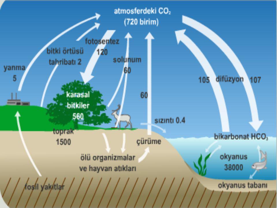 ●Oksijen de canlılar için önemli elementlerdendir ve oksijen döngüsü karbon döngüsü ile birlikte gerçekleşmektedir.Oksijen atmosferde oksijen gazı,kar