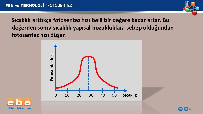 FEN ve TEKNOLOJİ / FOTOSENTEZ 10 Sıcaklık arttıkça fotosentez hızı belli bir değere kadar artar.