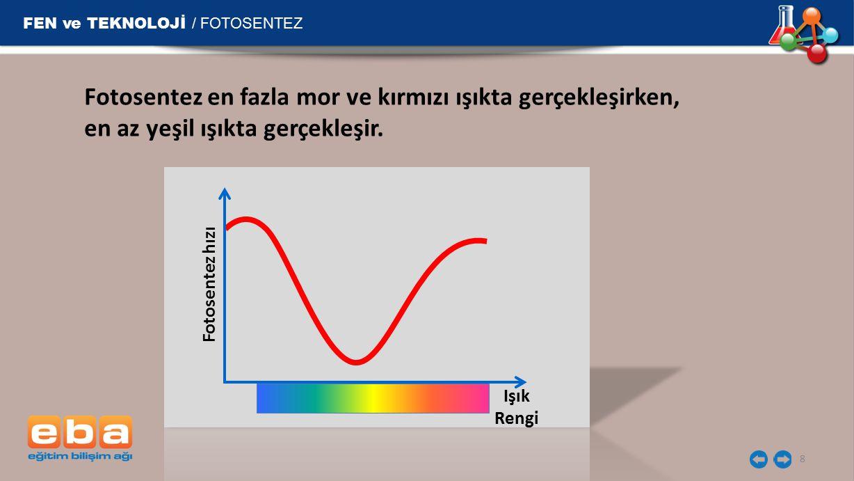 FEN ve TEKNOLOJİ / FOTOSENTEZ 8 Fotosentez en fazla mor ve kırmızı ışıkta gerçekleşirken, en az yeşil ışıkta gerçekleşir.