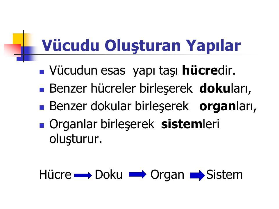 Vücudu Oluşturan Yapılar Vücudun esas yapı taşı hücredir.