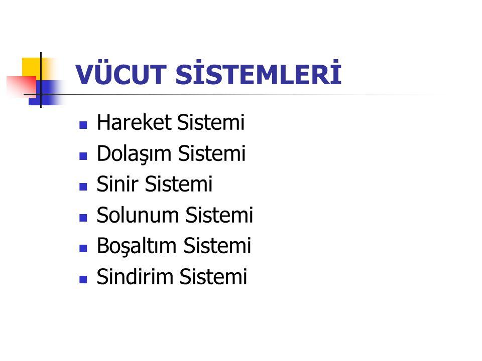 VÜCUT SİSTEMLERİ Hareket Sistemi Dolaşım Sistemi Sinir Sistemi Solunum Sistemi Boşaltım Sistemi Sindirim Sistemi
