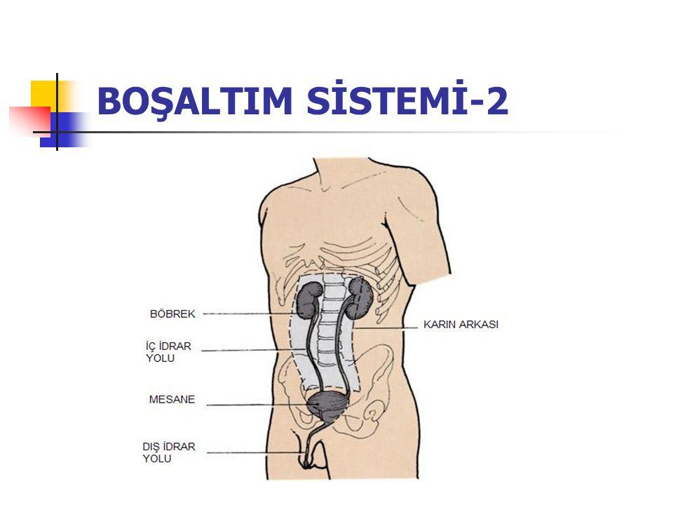 BOŞALTIM SİSTEMİ-2