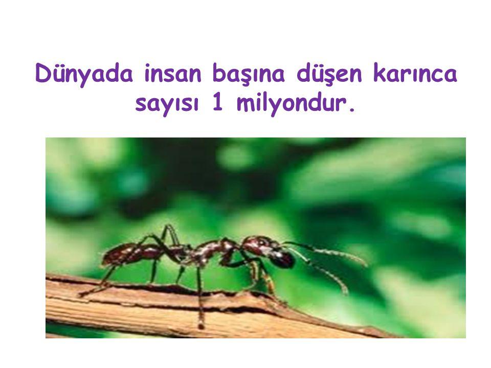 Dünyada insan başına düşen karınca sayısı 1 milyondur.
