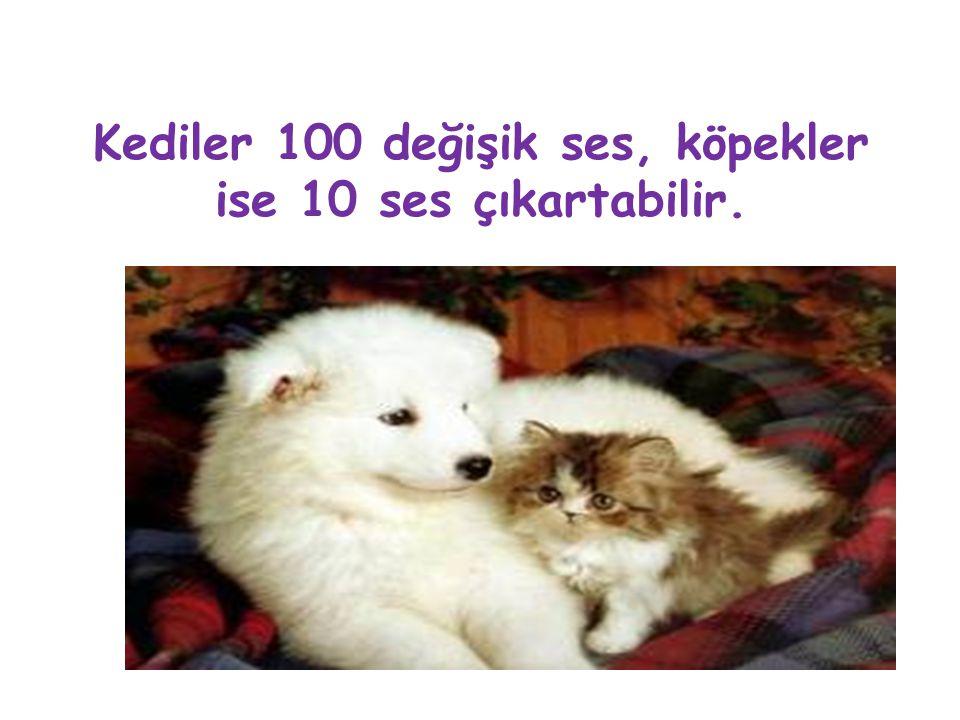 Kediler 100 değişik ses, köpekler ise 10 ses çıkartabilir.