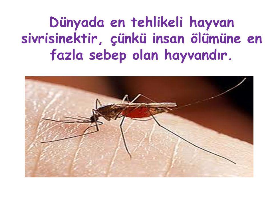 Dünyada en tehlikeli hayvan sivrisinektir, çünkü insan ölümüne en fazla sebep olan hayvandır.