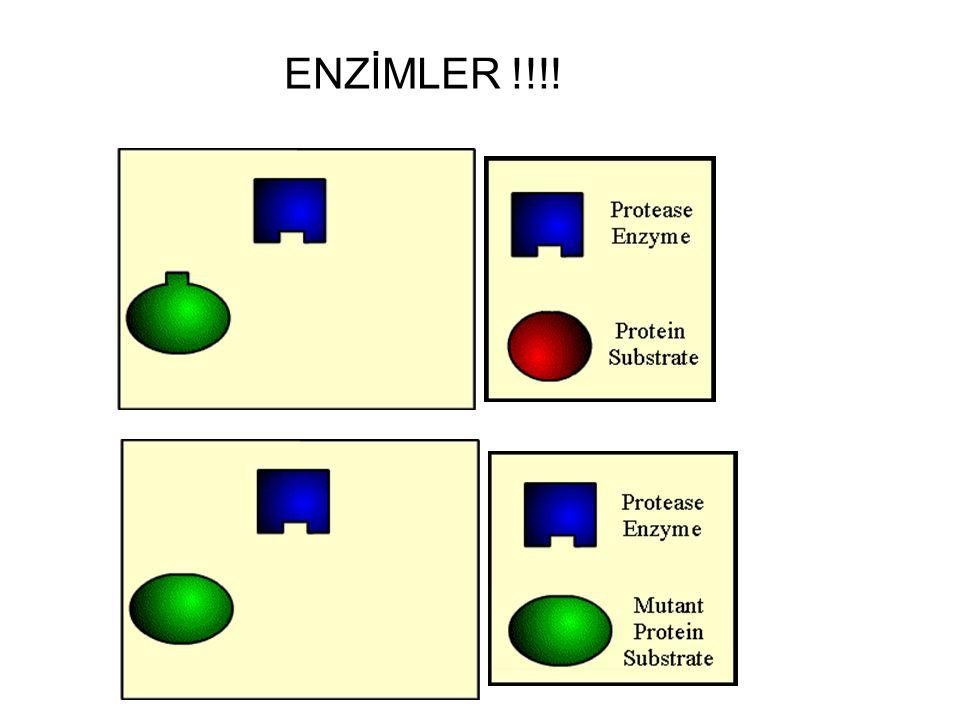 ENZİMLER !!!!