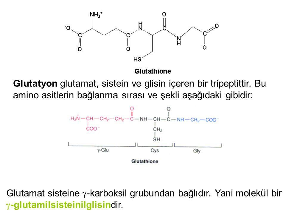 Glutatyon glutamat, sistein ve glisin içeren bir tripeptittir. Bu amino asitlerin bağlanma sırası ve şekli aşağıdaki gibidir: Glutamat sisteine  -kar