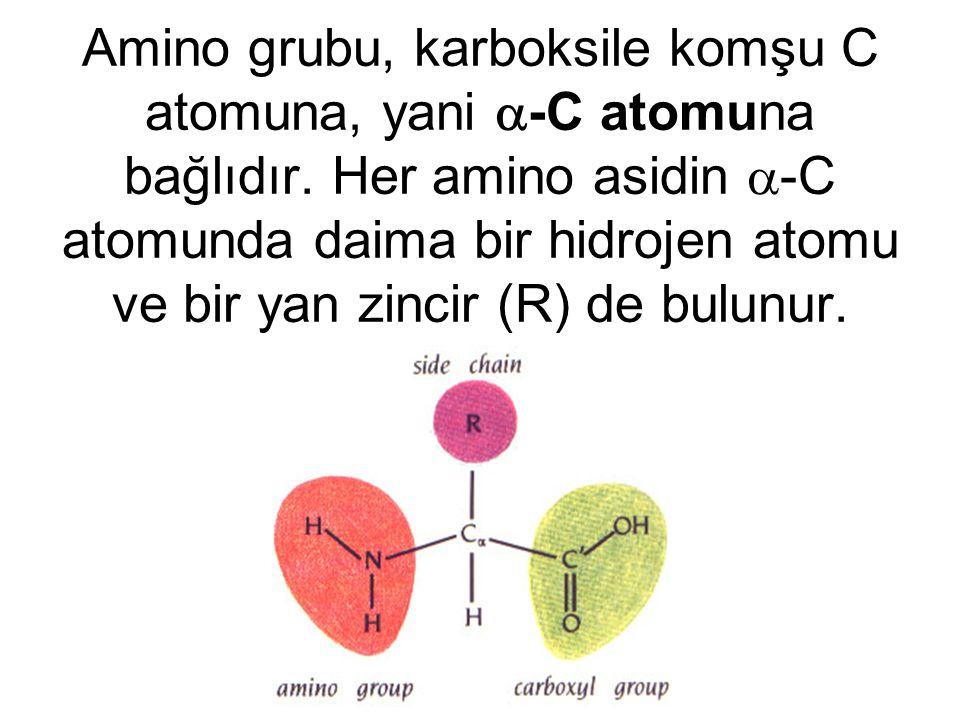 Amino grubu, karboksile komşu C atomuna, yani  -C atomuna bağlıdır. Her amino asidin  -C atomunda daima bir hidrojen atomu ve bir yan zincir (R) de