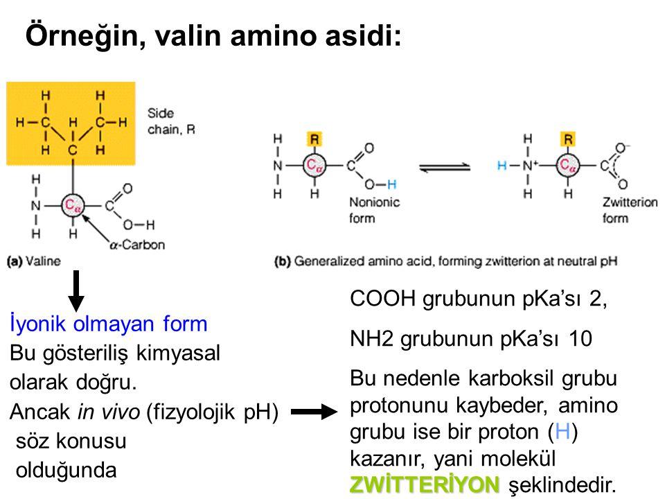 Örneğin, valin amino asidi: İyonik olmayan form Bu gösteriliş kimyasal olarak doğru. Ancak in vivo (fizyolojik pH) söz konusu olduğunda COOH grubunun