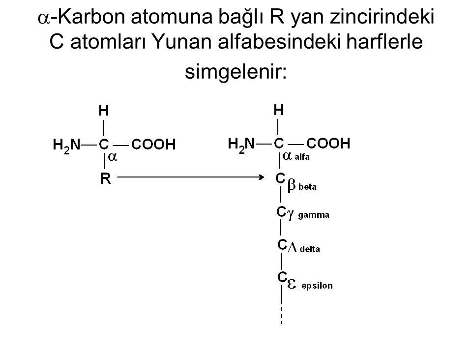  -Karbon atomuna bağlı R yan zincirindeki C atomları Yunan alfabesindeki harflerle simgelenir: