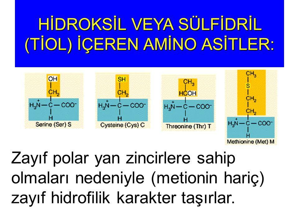 HİDROKSİL VEYA SÜLFİDRİL (TİOL) İÇEREN AMİNO ASİTLER: Zayıf polar yan zincirlere sahip olmaları nedeniyle (metionin hariç) zayıf hidrofilik karakter t