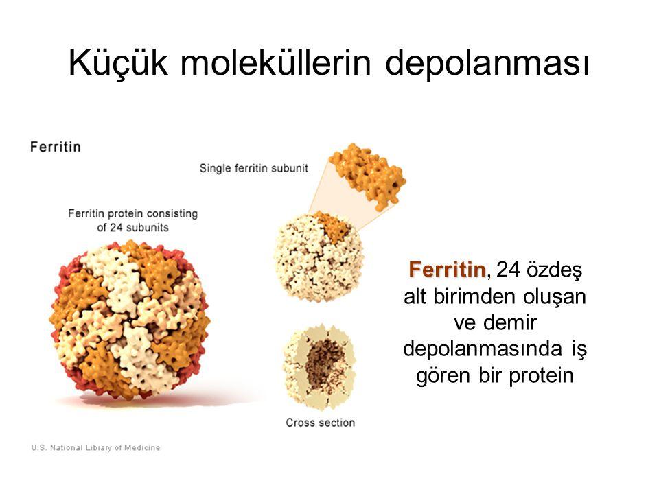Ferritin Ferritin, 24 özdeş alt birimden oluşan ve demir depolanmasında iş gören bir protein Küçük moleküllerin depolanması