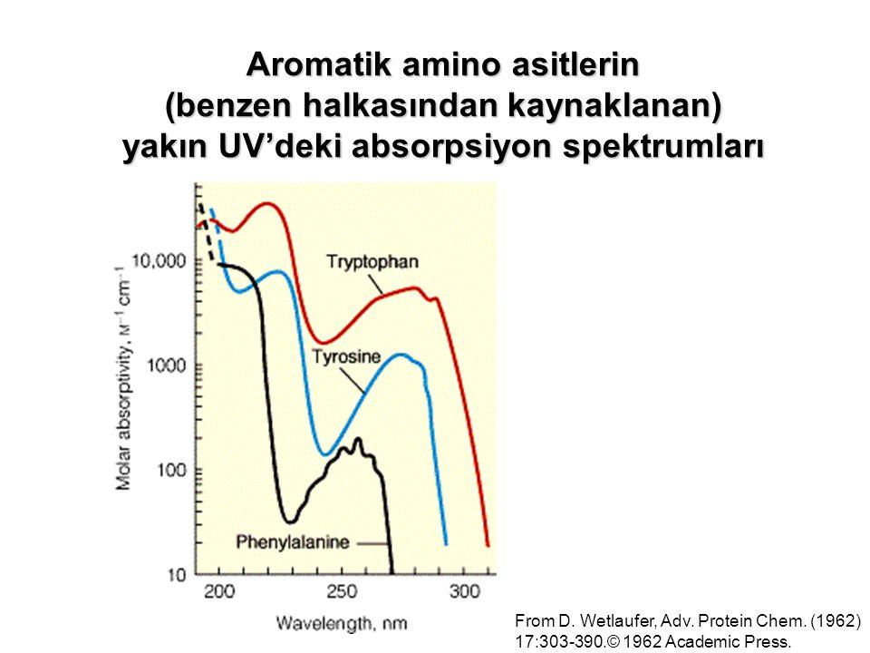 Aromatik amino asitlerin (benzen halkasından kaynaklanan) yakın UV'deki absorpsiyon spektrumları From D. Wetlaufer, Adv. Protein Chem. (1962) 17:303-3