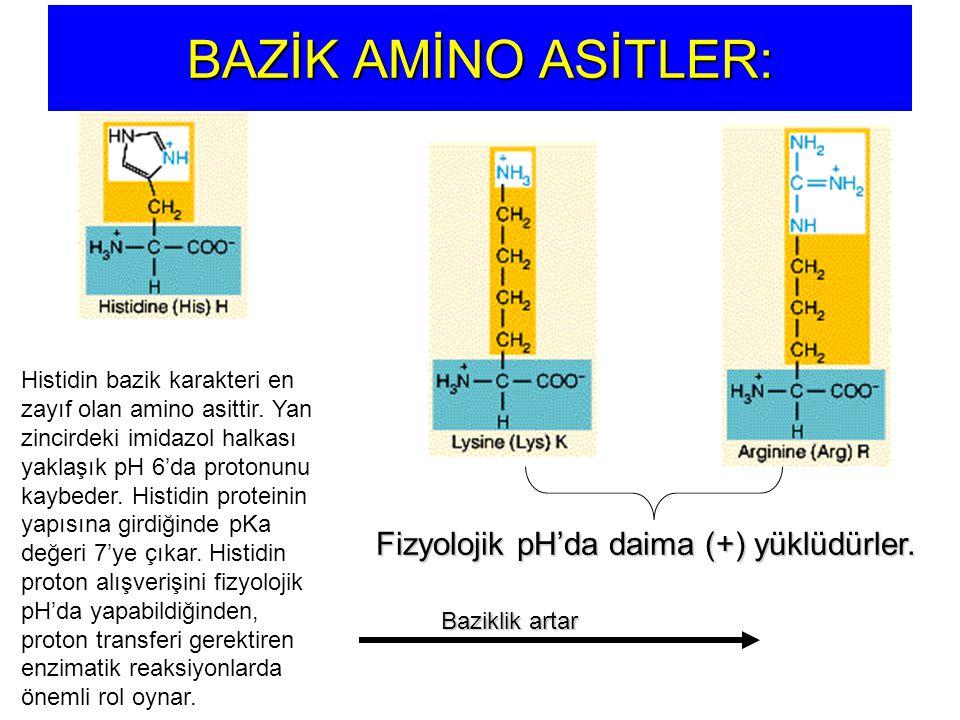 BAZİK AMİNO ASİTLER: Histidin bazik karakteri en zayıf olan amino asittir. Yan zincirdeki imidazol halkası yaklaşık pH 6'da protonunu kaybeder. Histid